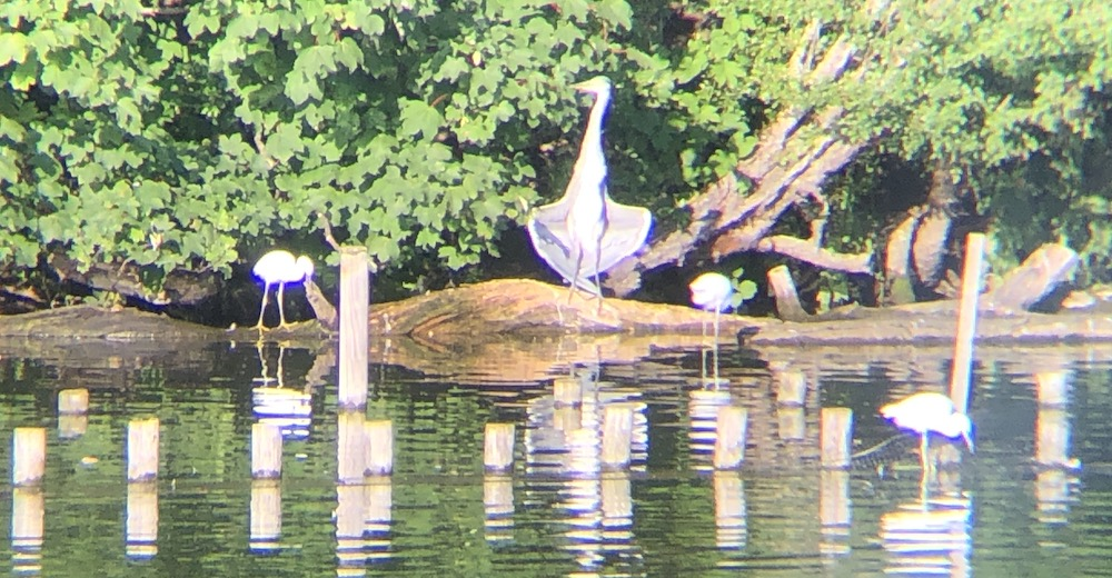 heron cooling in the sun